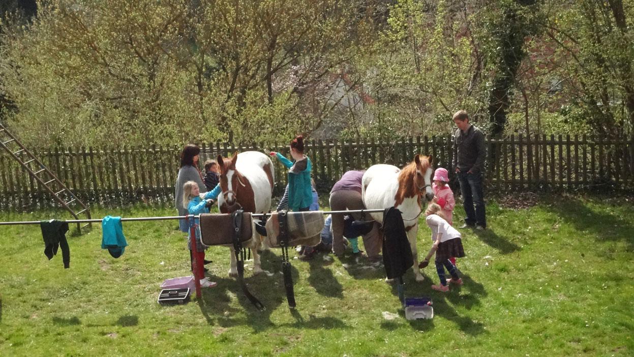 09 DSC06675 pferde striegeln